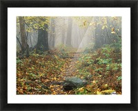 Shenandoah National Park In Virginia Picture Frame print