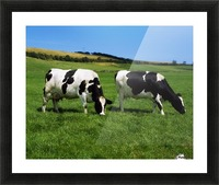 County Cork, Ireland, Dairy Cattle Picture Frame print