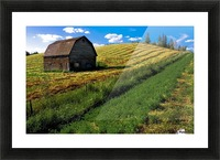 Old Barn In A Field Picture Frame print