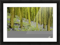 Bluebell Wood Impression Picture Frame print