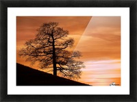 Tree Against A Sunset Sky, Nottinghamshire, England Picture Frame print