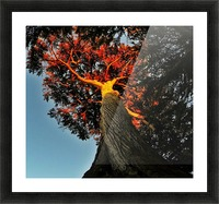 Tree on Fire Picture Frame print