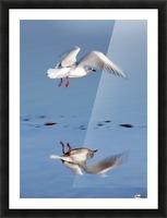 Bird Landing Picture Frame print