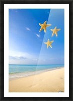 Starfish Falling In Front Of The Ocean Picture Frame print