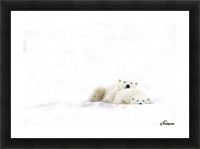 Two Polar Bears Snuggling Picture Frame print