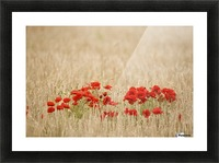 Poppies Growing Wild Picture Frame print