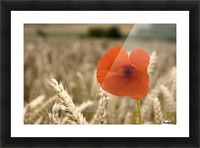 Red Flower In Field Picture Frame print