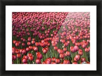 Tulips Picture Frame print