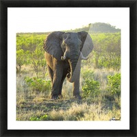 Elephant Picture Frame print