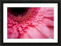 Close Up Of A Pink Flower Picture Frame print