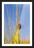 Lady Bug On A Plant Picture Frame print