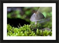 Closeup Of Mushroom Picture Frame print
