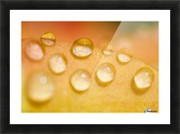 Water Droplets Picture Frame print
