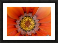 Lake Of The Woods, Ontario, Canada; Colourful Flowers In Bloom Picture Frame print
