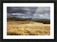 Field Of Wheat With Dark Clouds Overhead, Northumberland, England Picture Frame print