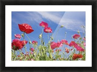 Red Flowers Against Blue Sky Picture Frame print