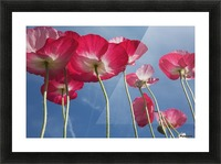 Pink Flowers Picture Frame print