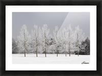 Winter, Calgary, Alberta, Canada Picture Frame print