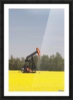 Alberta, Canada; Pump Jack In A Flowering Canola Field Picture Frame print