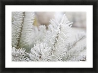 Frost On Pine Tree Picture Frame print