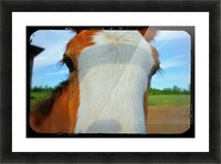 Baby Clydesdale Picture Frame print