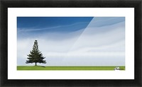A Coniferous Tree Standing Alone In A Field Picture Frame print