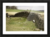 Northumberland, England; Sheep Grazing Along A Stone Wall Picture Frame print