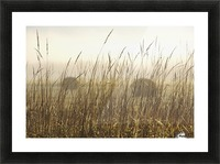 Bales Of Hay In A Field In The Fog; Thunder Bay, Ontario, Canada Picture Frame print