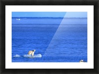 Polar Bear (Ursus Maritimus) Standing On A Piece Of Floating Ice; Coburg Island, Nunavut, Canada Picture Frame print