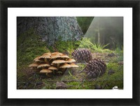 Mushrooms And Pine Cones On The Forest Floor; Northumberland, England Picture Frame print