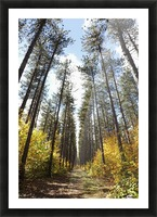 Path Through A Forest In Autumn; Sault St. Marie, Ontario, Canada Picture Frame print