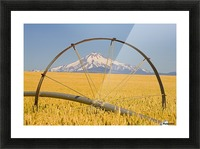 Irrigation Pipe In Wheat Field With Mount Hood In Background; Oregon, Usa Picture Frame print