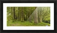 A Lush Forest; Tofino, British Columbia, Canada Picture Frame print