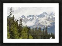 A Forest And The Rocky Mountains; Jasper, Alberta, Canada Picture Frame print