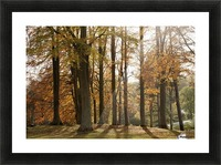 Trees In Autumn Colours Casting A Shadow On The Ground; Northumberland, England Picture Frame print