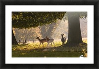 Deer Standing Under A Tree; North Yorkshire, England Picture Frame print