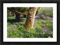 Mount Congreve Gardens; County Waterford, Ireland Picture Frame print