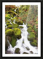 Green moss along small waterfall;Happy valley oregon united states of america Picture Frame print