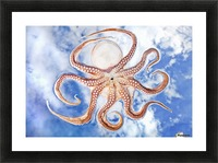 An octopus with blue sky and cloud in the background Picture Frame print