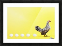 Hen standing in line with five eggs;British columbia canada Picture Frame print