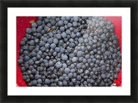 A bowl of blueberries;Alaska united states of america Picture Frame print