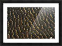 Low tide reveals patterns on the beach; Cannon Beach, Oregon, United States of America Picture Frame print