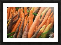 Green plastic baskets with freshly picked organic carrots (Daucus carota) for sale at an outdoor market, Byward Market; Ottawa, Ontario, Canada Picture Frame print