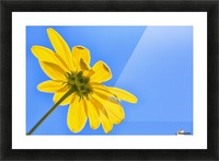 Yellow flower against a blue sky; Bolivia Picture Frame print