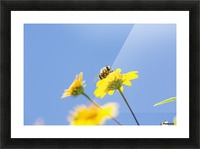 A bee is busy pollenating flowers as it goes about it's job collecting pollen; Bolivia Picture Frame print