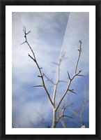 Tree with buds in springtime; Milton, Ontario, Canada Picture Frame print