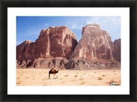 Baby camel and mother; Wadi Rum, Jordan Picture Frame print