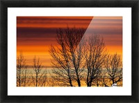 Silhouetted tree branches with dramatically colourful clouds at sunrise; Calgary, Alberta, Canada Picture Frame print