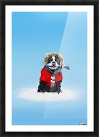 French bull terrier wearing jacket on blue background; Toronto, Ontario, Canada Picture Frame print