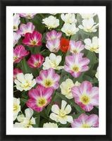 Flowers at Keukenhof Gardens; Amsterdam, Holland Picture Frame print